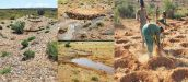 Land Rehabilitation at the Karoo National Park
