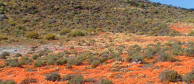 Calvinia, in the Northern Cape, South Africa